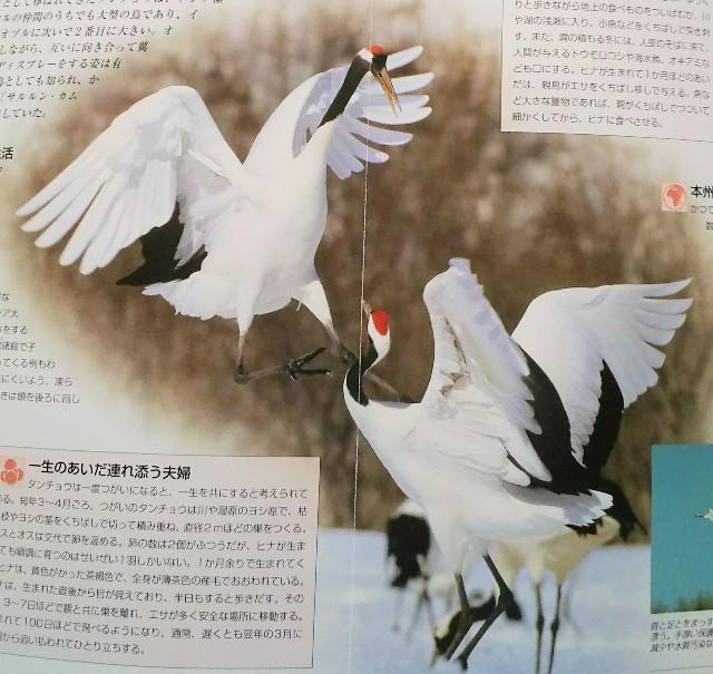 f:id:sakuyamonju:20190418163441j:plain