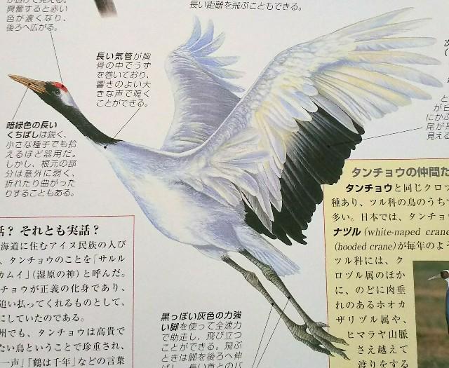 f:id:sakuyamonju:20190419215958j:plain