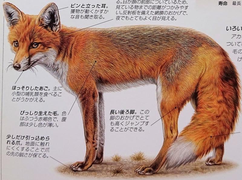f:id:sakuyamonju:20190810102602j:plain