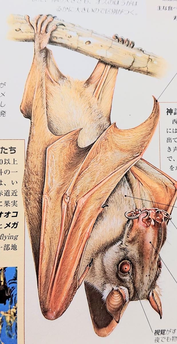 f:id:sakuyamonju:20190926203608j:plain