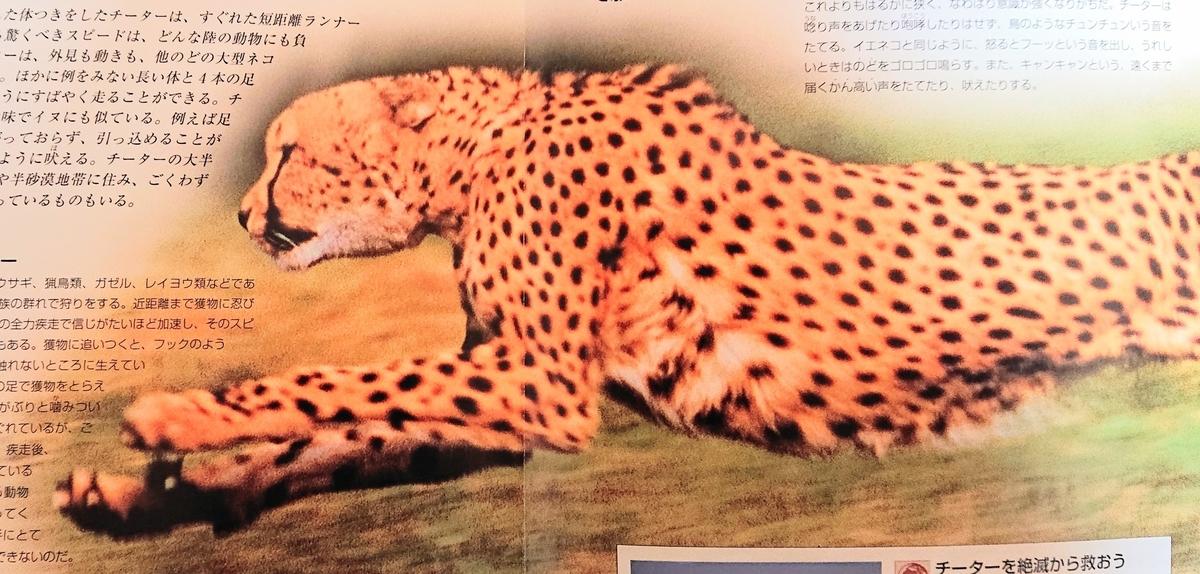 f:id:sakuyamonju:20200219163917j:plain