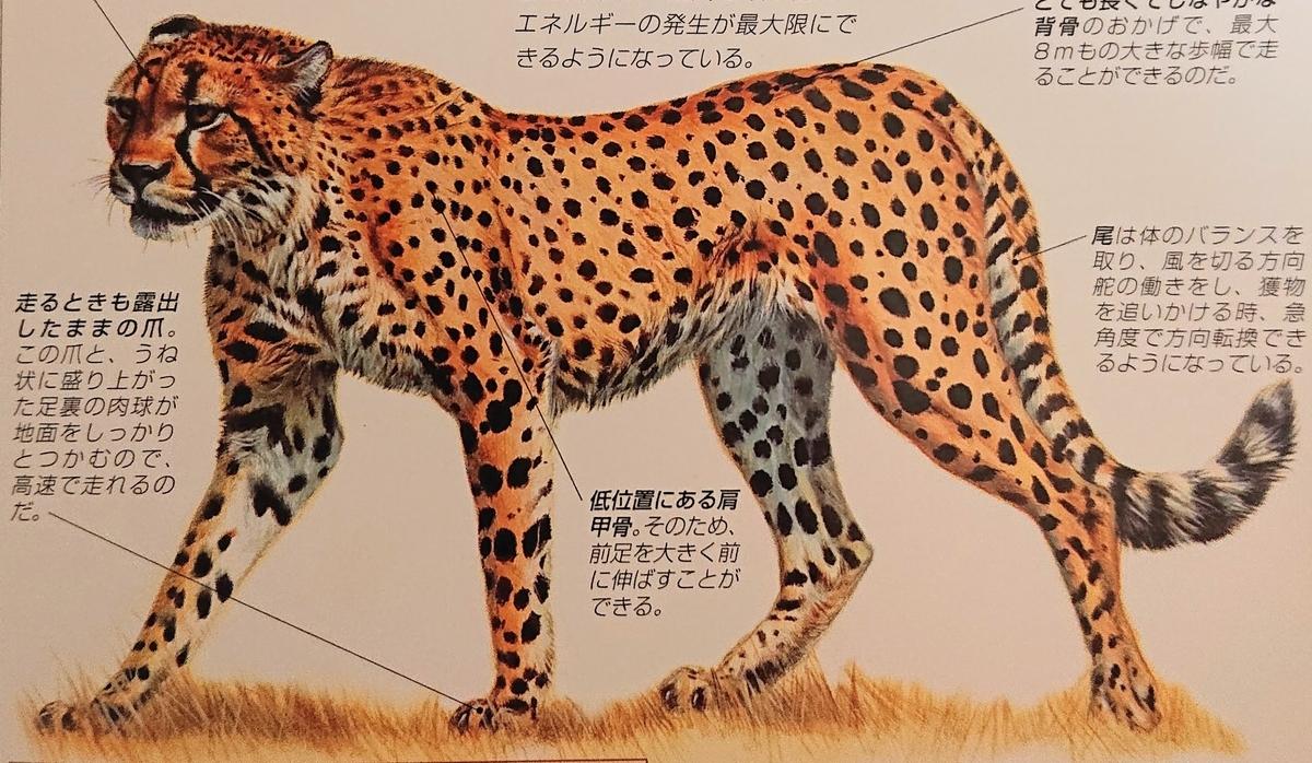 f:id:sakuyamonju:20200219192239j:plain