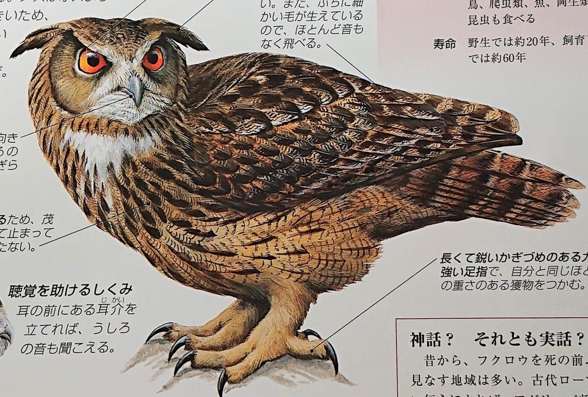 f:id:sakuyamonju:20200531164357j:plain