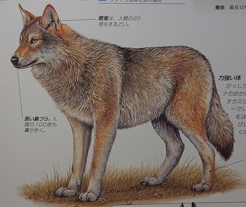 f:id:sakuyamonju:20210303152548j:plain