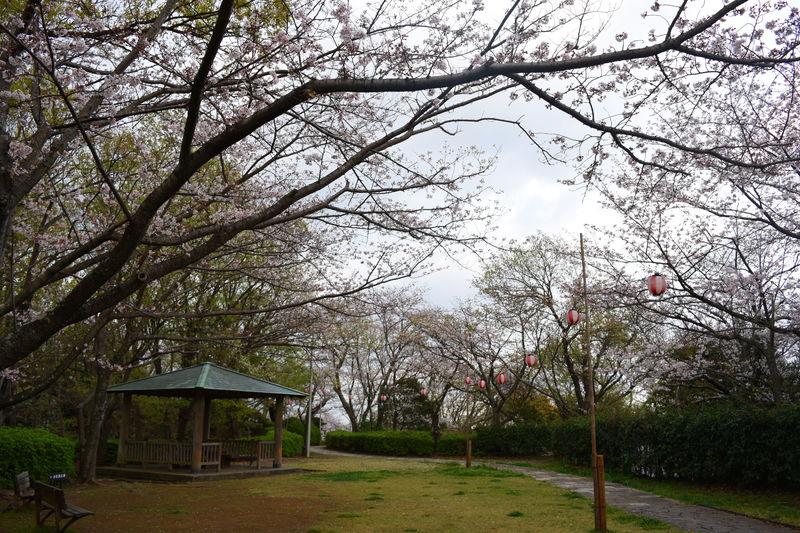 f:id:sakuyaoi:20180404192818j:plain