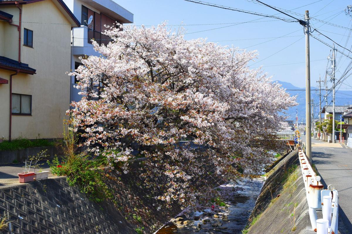 f:id:sakuyaoi:20180406005108j:plain