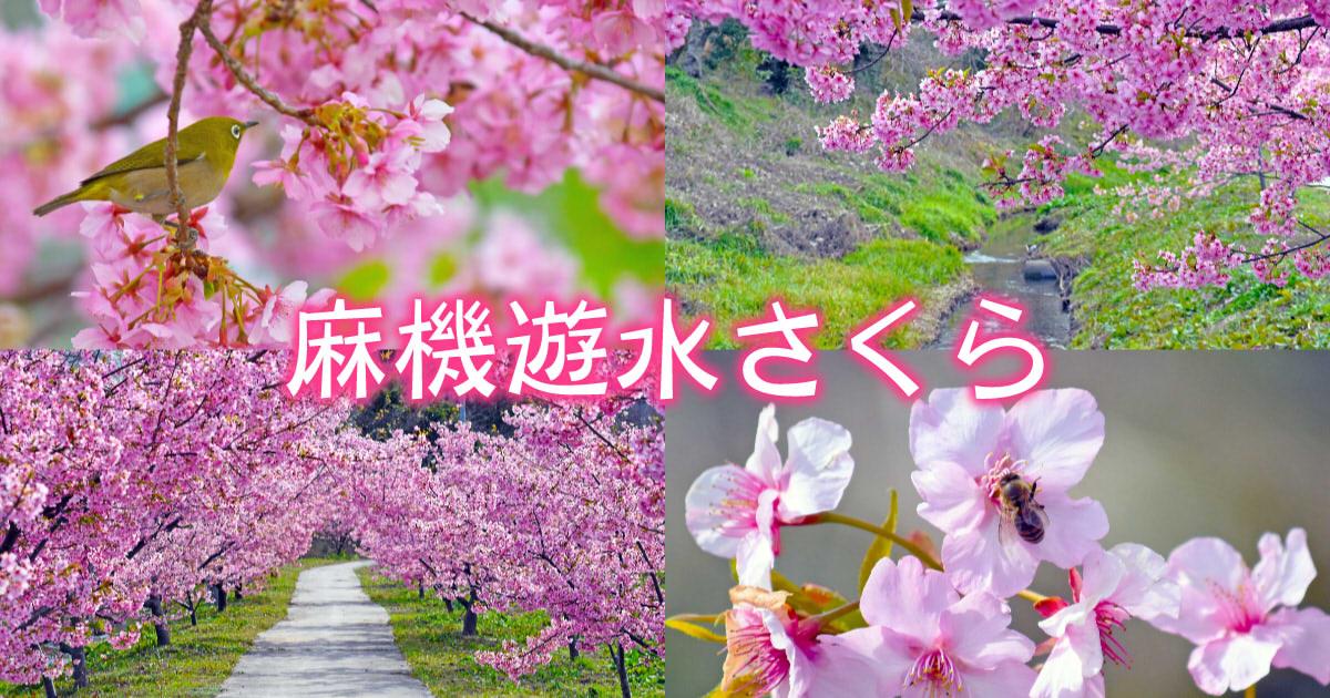 f:id:sakuyaoi:20200220024856j:plain