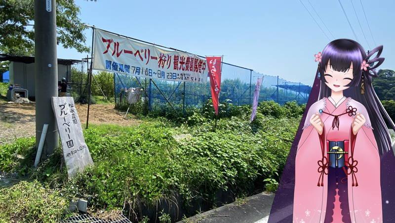 f:id:sakuyaoi:20200805171511j:plain