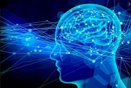 脳は、身体全体をコントロールする司令塔です。