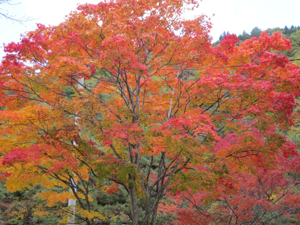 今週のお題「秋の空気」