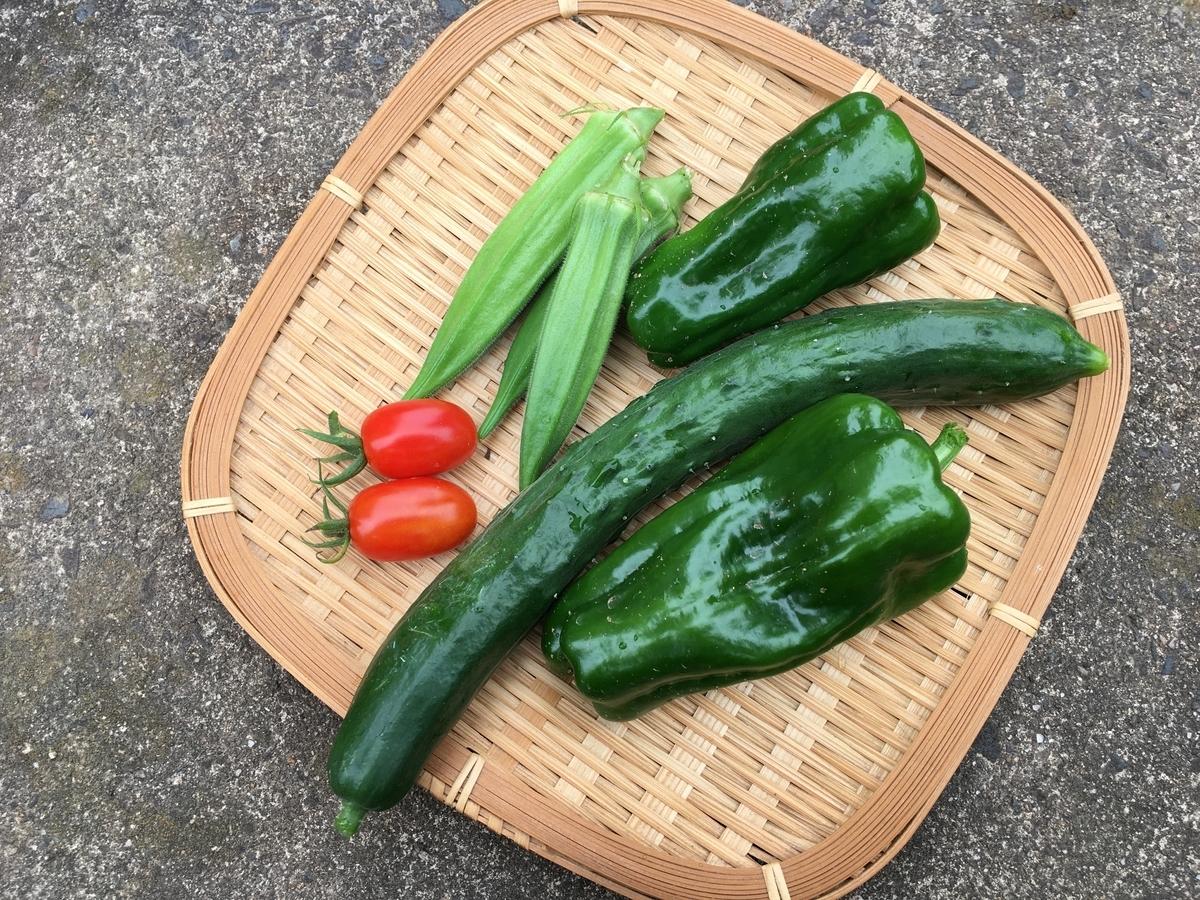 収穫した夏野菜(ミニトマト・五角オクラ・キュウリ・ピーマン)