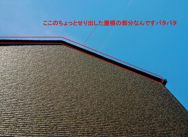 f:id:sameo-japan:20200605151901j:plain