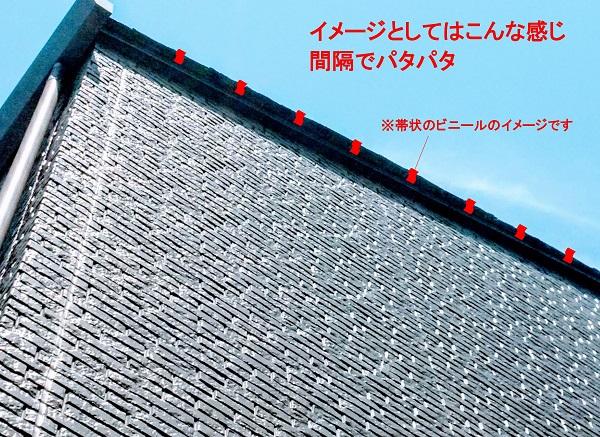 f:id:sameo-japan:20200605151924j:plain