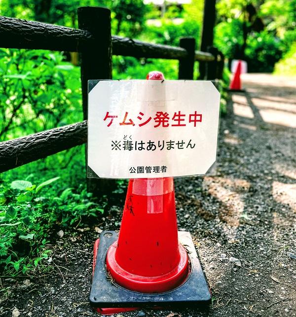 f:id:sameo-japan:20210420143219j:plain