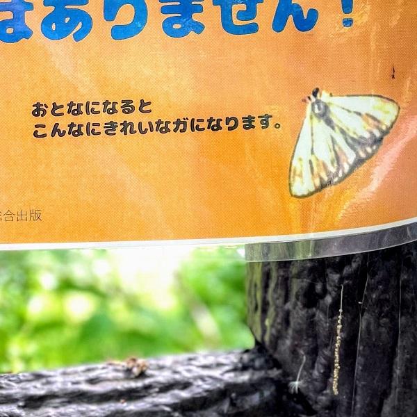 f:id:sameo-japan:20210420152952j:plain