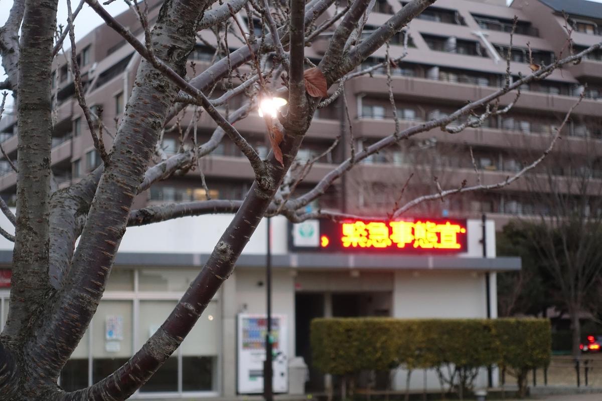 f:id:sameshima_fjct:20210115140410j:plain
