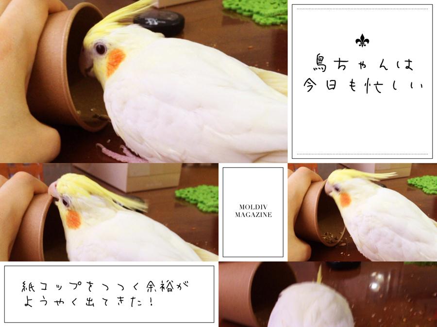 f:id:samidareshikini:20170205171812j:plain