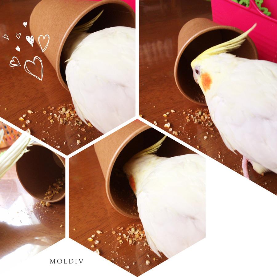f:id:samidareshikini:20170209133313j:plain