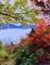京都新聞写真コンテスト 紅葉