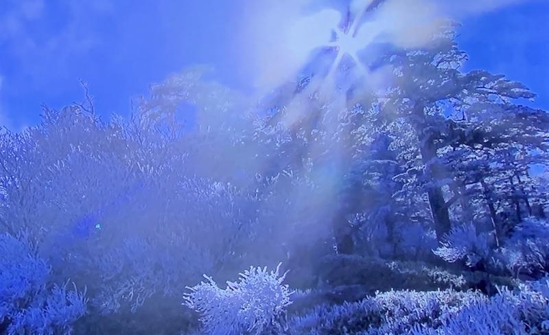 京都新聞写真コンテスト 初雪