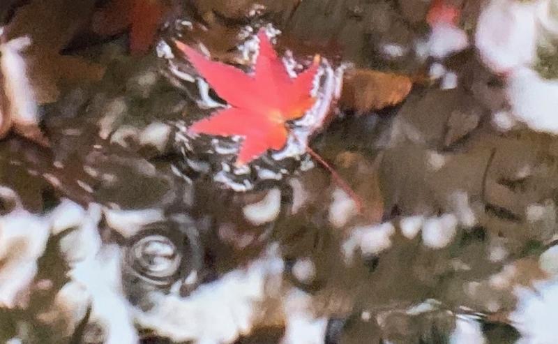 京都新聞写真コンテスト 紅葉狩り