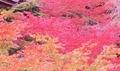 [紅葉]京都新聞写真コンテスト 金剛輪寺