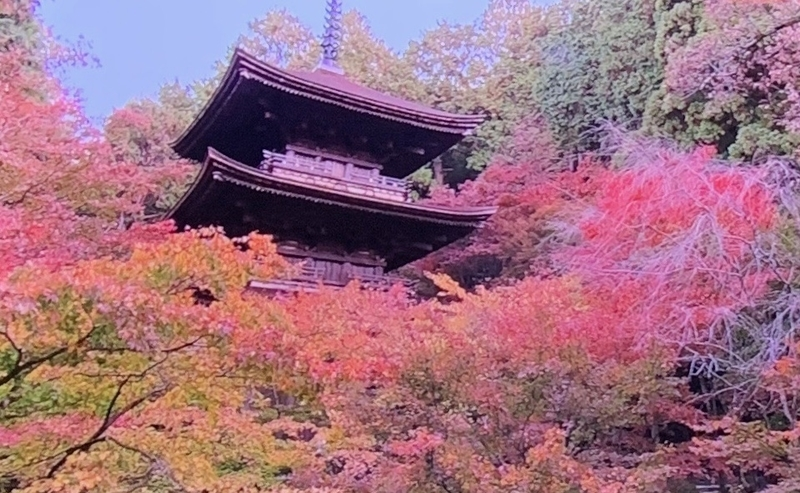 京都新聞写真コンテスト 金剛輪寺