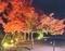 京都新聞写真コンテスト 平等院