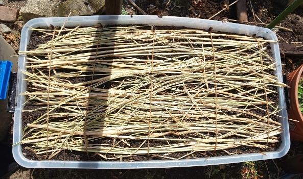 蒔いた種の保温のため藁を敷いたプランター