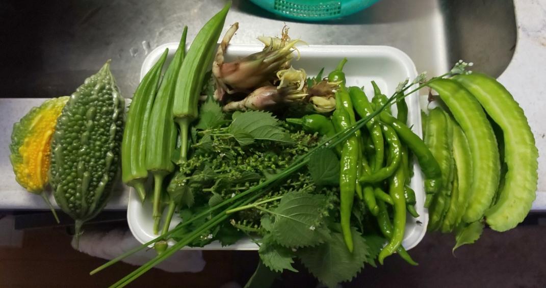 収穫した野菜7種類