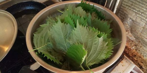 よく洗って鍋に入れた青紫蘇の葉