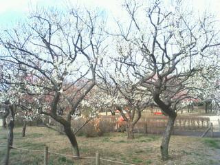 f:id:samuraiRed:20090215100900j:image