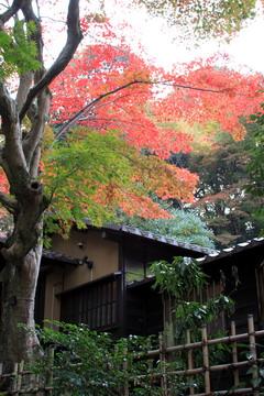 f:id:samuraiRed:20101113150829j:image