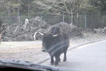 f:id:samuraiRed:20110506162735j:image