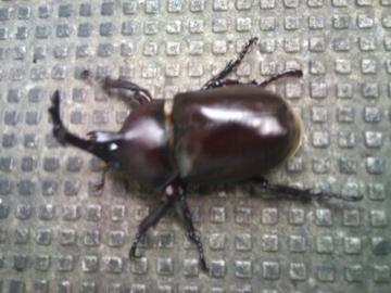 f:id:samuraiRed:20120812184639j:image