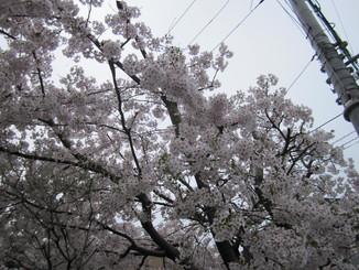 f:id:san-sai:20170410115353j:plain