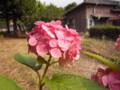 花は咲く 2009.7.4 九州大学六本松キャンパス亭々舎前