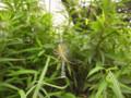 六本松の森で(2) 2009.8.1 ゆるゆる自由観察会