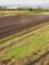 畑に虹 2009.10.18 北野町鳥巣