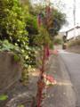 まちかど 2009.10.30 六本松(茶園谷)
