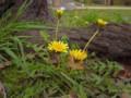 桜の下で 2010.3.14 西公園