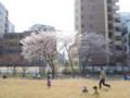 六本松さくらまつり 2012.4.8