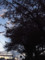 麦野公園の桜 2012.10.13 福岡市博多区三筑