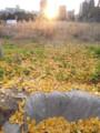 秋送り 2012.12.2 九州大学六本松跡地