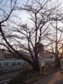 麦野公園の桜(福岡市博多区)2011.3.11