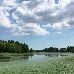 水元公園 夏