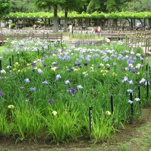 菖蒲沼公園