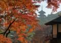 [B009 晩秋の紅葉(三渓園]