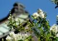 A205高蔵寺