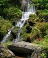 yac16 滝とクリンソウ